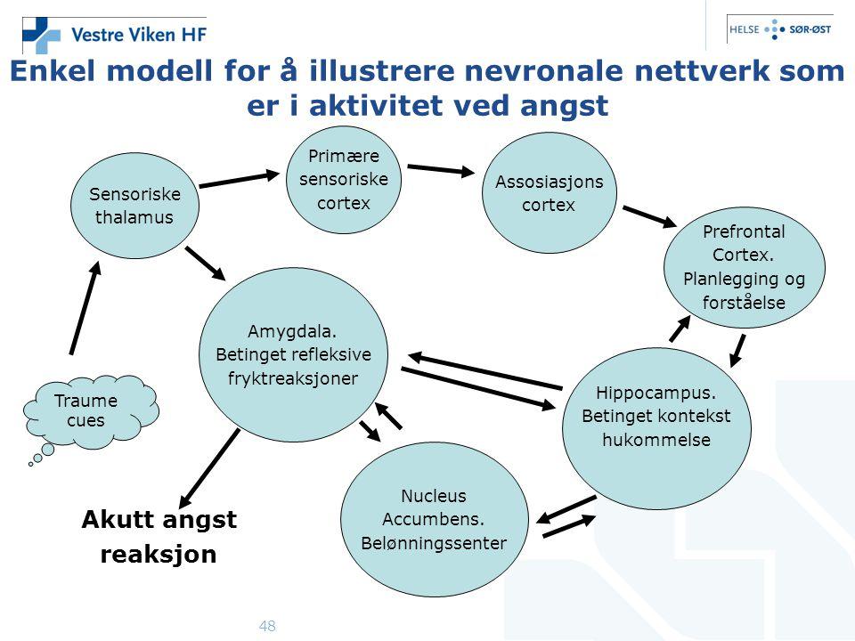 48 Enkel modell for å illustrere nevronale nettverk som er i aktivitet ved angst Sensoriske thalamus Primære sensoriske cortex Assosiasjons cortex Prefrontal Cortex.