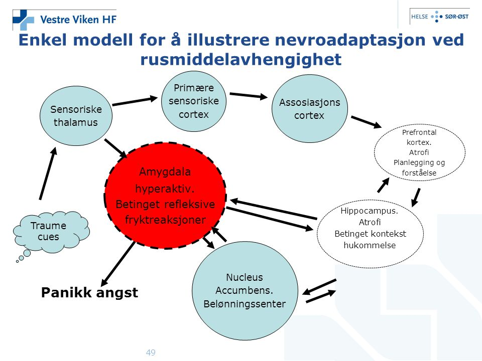 49 Enkel modell for å illustrere nevroadaptasjon ved rusmiddelavhengighet Sensoriske thalamus Primære sensoriske cortex Assosiasjons cortex Prefrontal kortex.
