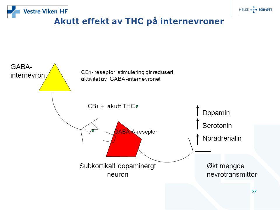 57 Akutt effekt av THC på internevroner GABA-A-reseptor CB 1 - reseptor stimulering gir redusert aktivitet av GABA -internevronet Subkortikalt dopaminergt neuron Dopamin Serotonin Noradrenalin Økt mengde nevrotransmittor GABA- internevron CB 1 + akutt THC