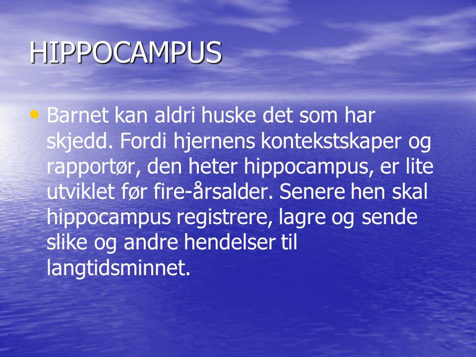 HIPPOCAMPUS • • Barnet kan aldri huske det som har skjedd.