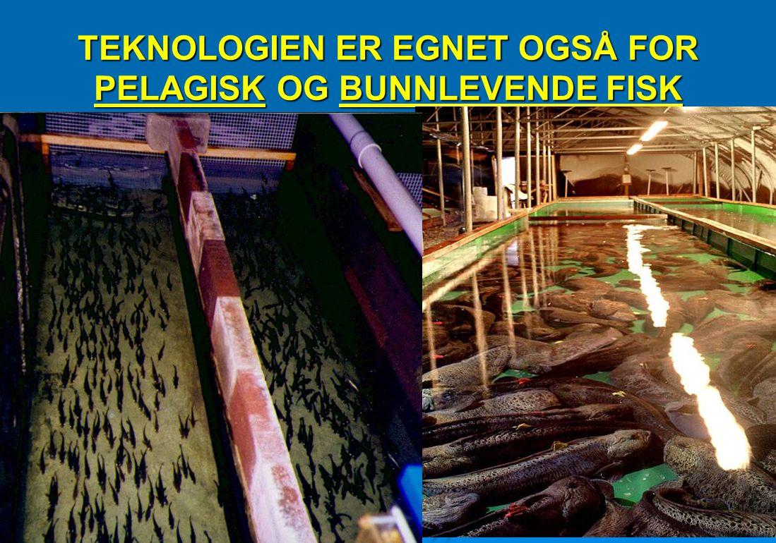 TEKNOLOGIEN ER EGNET OGSÅ FOR PELAGISK OG BUNNLEVENDE FISK