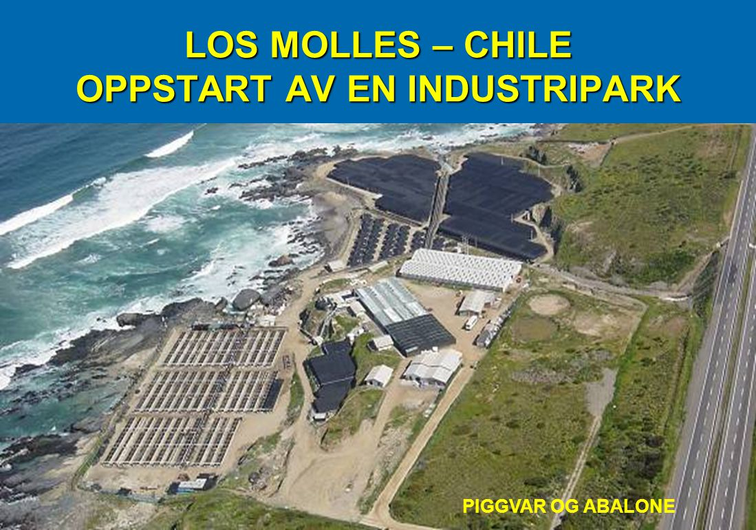 LOS MOLLES – CHILE OPPSTART AV EN INDUSTRIPARK PIGGVAR OG ABALONE