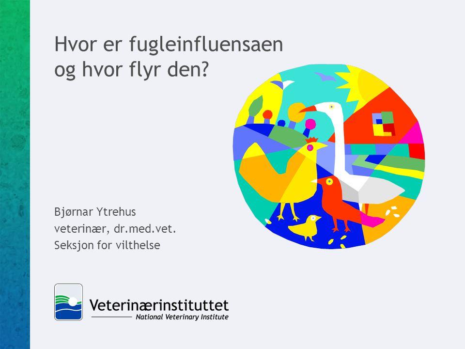 Hvor er fugleinfluensaen og hvor flyr den? Bjørnar Ytrehus veterinær, dr.med.vet. Seksjon for vilthelse