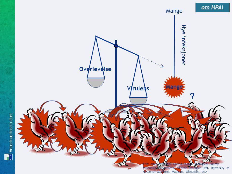 Virulens Overlevelse Mange Nye infeksjoner ? Fritt etter D.O.Joly, United States Geological Survey- Wisconsin Cooperative Wildlife Research Unit, Univ