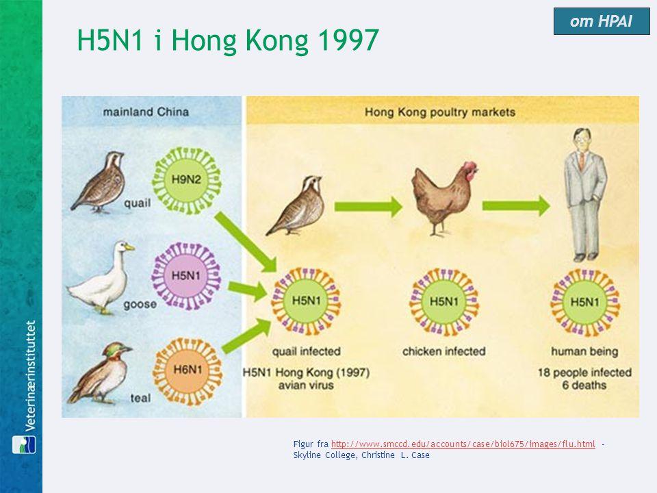 H5N1 i Hong Kong 1997 om HPAI Figur fra http://www.smccd.edu/accounts/case/biol675/images/flu.html - Skyline College, Christine L. Casehttp://www.smcc