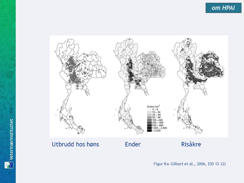 Utbrudd hos hønsEnder Risåkre Figur fra Gilbert et al., 2006, EID 12 (2) om HPAI