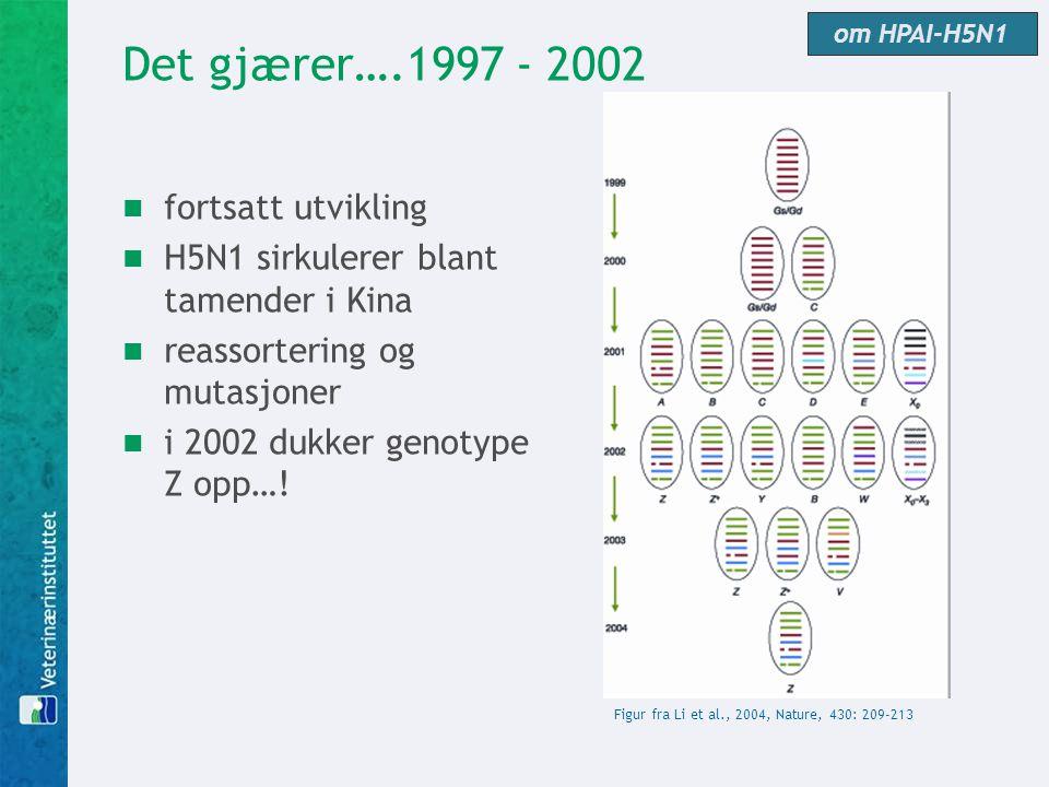 Det gjærer….1997 - 2002  fortsatt utvikling  H5N1 sirkulerer blant tamender i Kina  reassortering og mutasjoner  i 2002 dukker genotype Z opp…! Fi