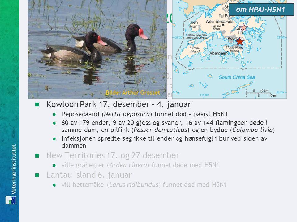 Hong Kong desember 2002  utbrudd av influensa blant svømmefugler i to parker i Hong Kong  Penfold Park (HK Jockey Club) 10. desember ●økt dødelighet
