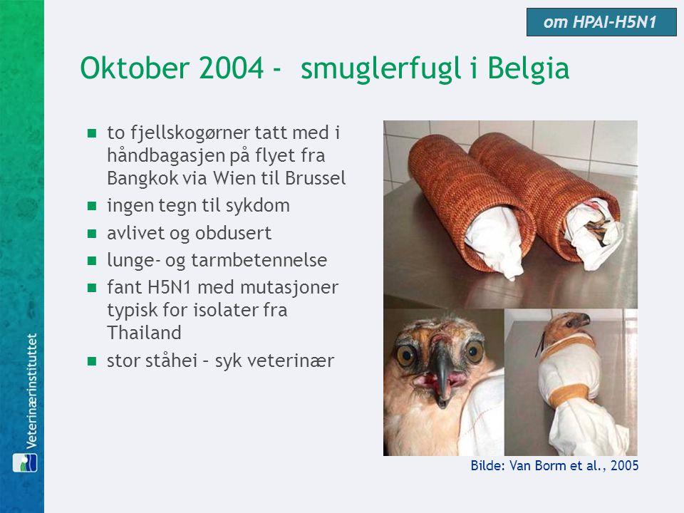 Oktober 2004 - smuglerfugl i Belgia  to fjellskogørner tatt med i håndbagasjen på flyet fra Bangkok via Wien til Brussel  ingen tegn til sykdom  av