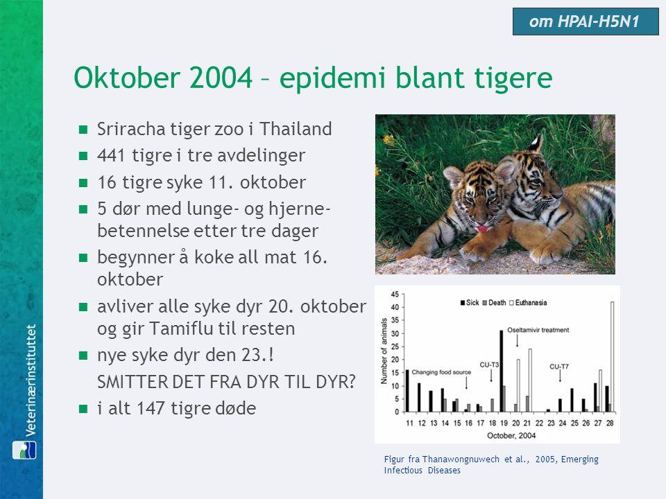 Oktober 2004 – epidemi blant tigere  Sriracha tiger zoo i Thailand  441 tigre i tre avdelinger  16 tigre syke 11. oktober  5 dør med lunge- og hje