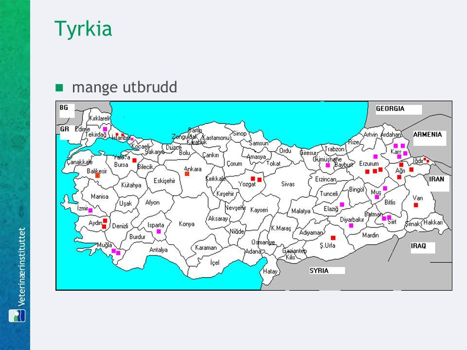 Tyrkia  mange utbrudd  tolv tilfeller av sykdom hos menneske, fire døde