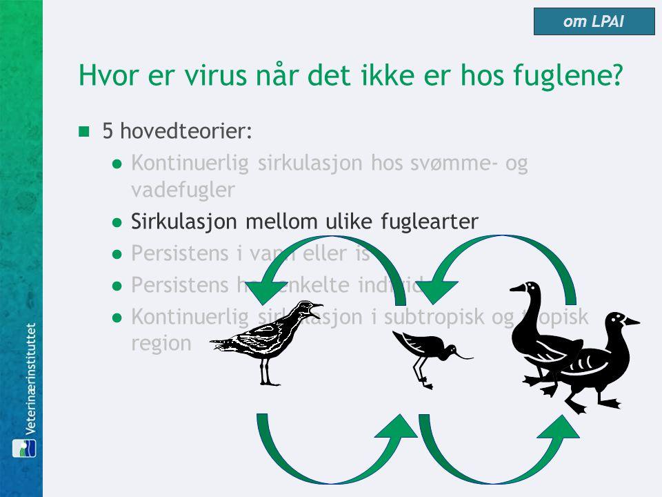 Hvor er virus når det ikke er hos fuglene?  5 hovedteorier: ●Kontinuerlig sirkulasjon hos svømme- og vadefugler ●Sirkulasjon mellom ulike fuglearter
