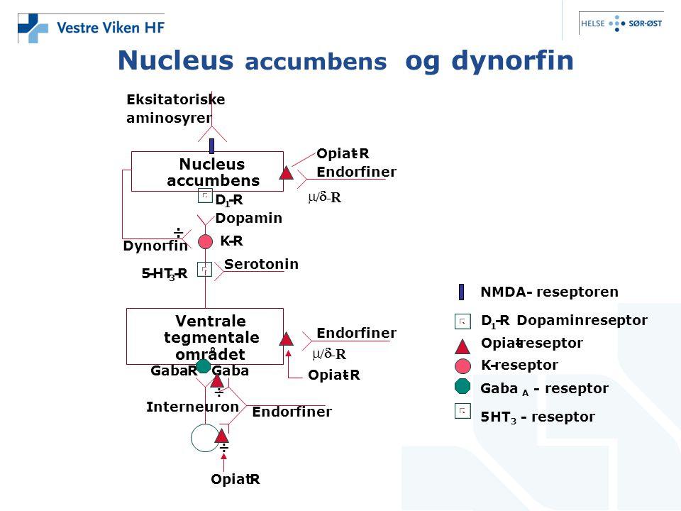 D 1 -RDopaminreseptor Opiat-reseptor K- Nucleus accumbens Ventrale tegmentale området K-R Dynorfin 5-HT 3 -R D 1 -R Endorfiner  /  -R Opiat-R Seroto