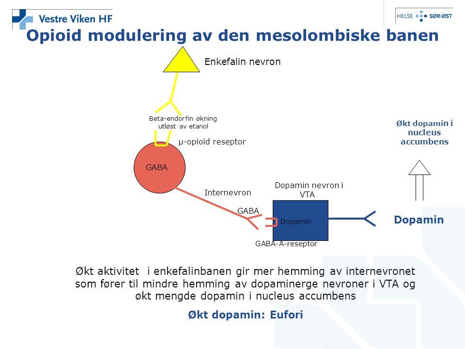Opioid modulering av den mesolombiske banen GABA Dopamin Økt aktivitet i enkefalinbanen gir mer hemming av internevronet som fører til mindre hemming