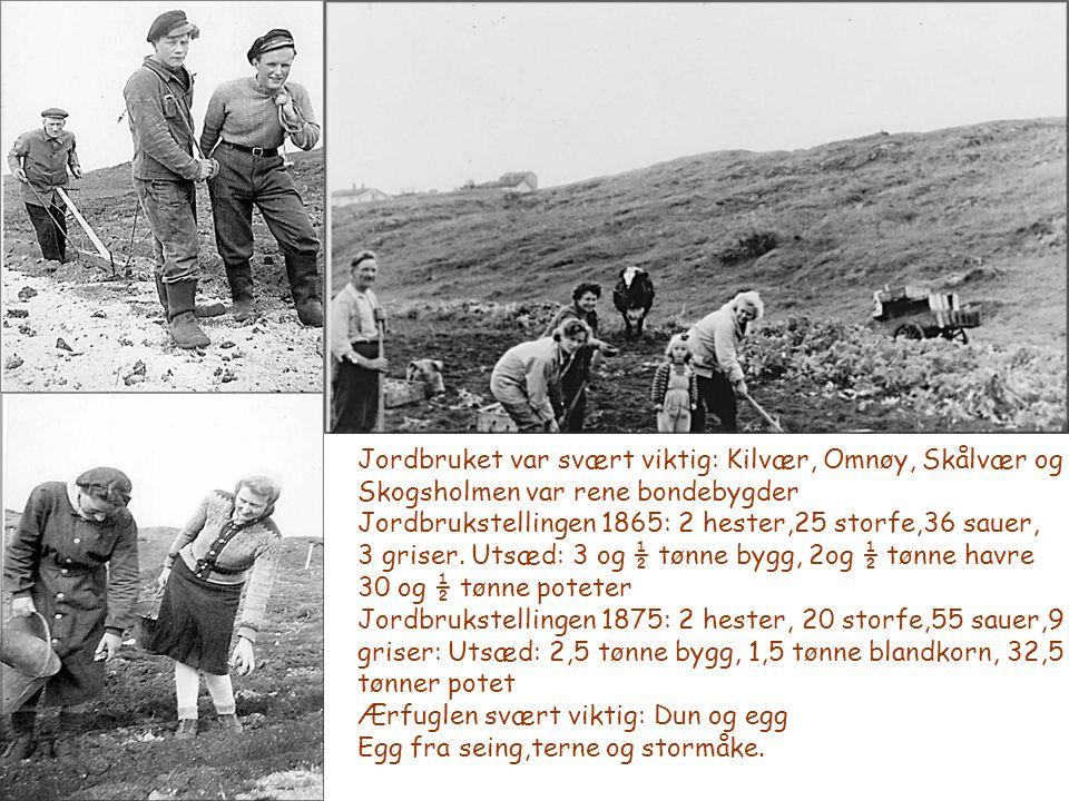 Jordbruket var svært viktig: Kilvær, Omnøy, Skålvær og Skogsholmen var rene bondebygder Jordbrukstellingen 1865: 2 hester,25 storfe,36 sauer, 3 griser