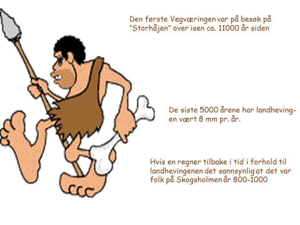 """Den første Vegværingen var på besøk på """"Storhåjen"""" over isen ca. 11000 år siden De siste 5000 årene har landheving- en vært 8 mm pr. år. Hvis en regne"""
