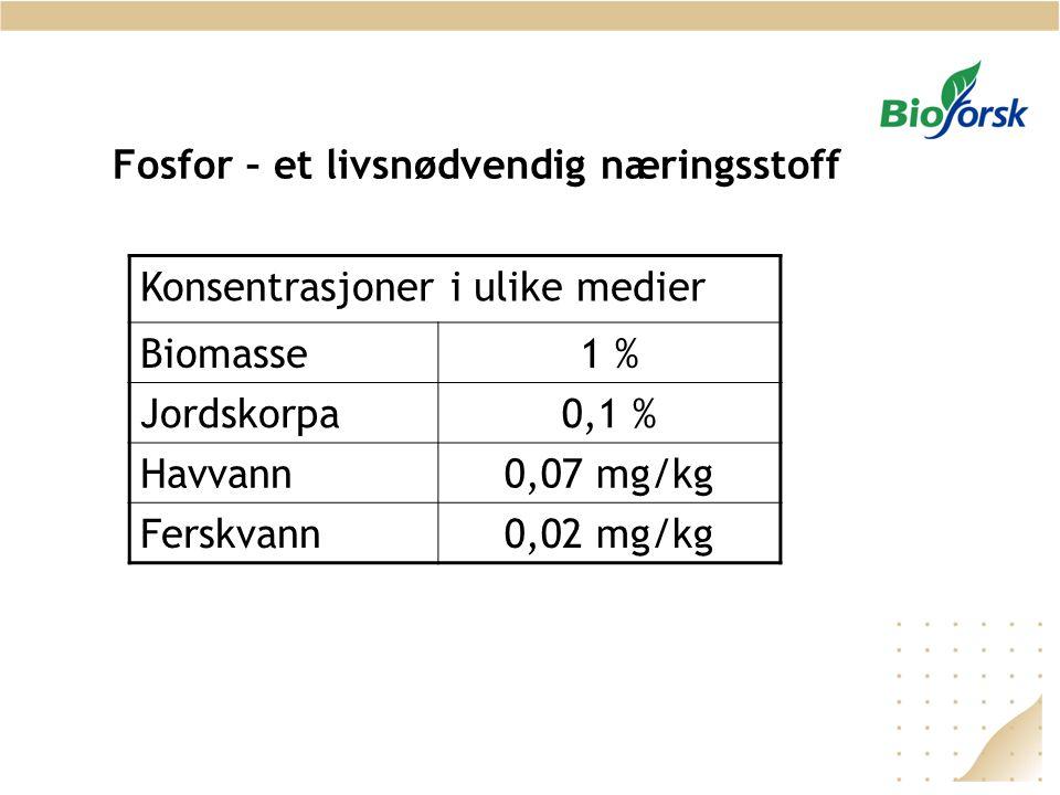 Fosfor – et livsnødvendig næringsstoff Konsentrasjoner i ulike medier Biomasse1 % Jordskorpa0,1 % Havvann0,07 mg/kg Ferskvann0,02 mg/kg