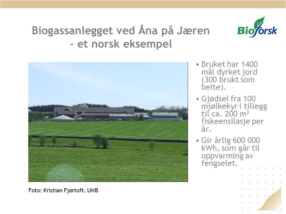 Biogassanlegget ved Åna på Jæren – et norsk eksempel •Bruket har 1400 mål dyrket jord (300 brukt som beite). •Gjødsel fra 100 mjølkekyr i tillegg til