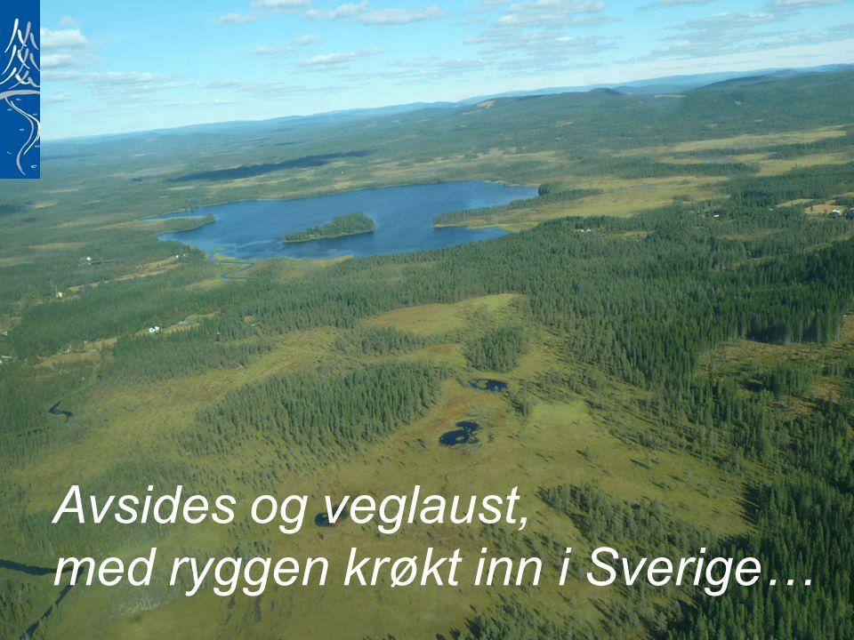 Avsides og veglaust, med ryggen krøkt inn i Sverige…