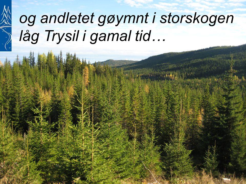 og andletet gøymnt i storskogen låg Trysil i gamal tid…