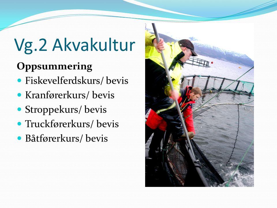 Vg.2 Akvakultur Oppsummering  Fiskevelferdskurs/ bevis  Kranførerkurs/ bevis  Stroppekurs/ bevis  Truckførerkurs/ bevis  Båtførerkurs/ bevis