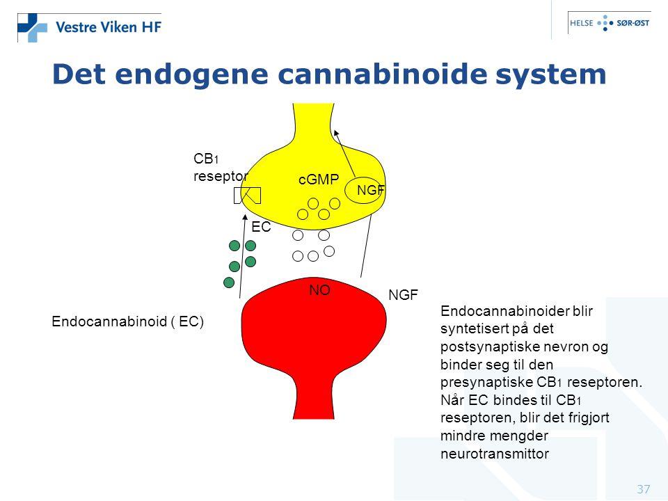 37 Endocannabinoider blir syntetisert på det postsynaptiske nevron og binder seg til den presynaptiske CB 1 reseptoren. Når EC bindes til CB 1 resepto