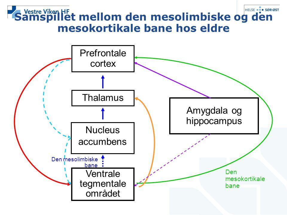 Samspillet mellom den mesolimbiske og den mesokortikale bane hos eldre Prefrontale cortex Thalamus Nucleus accumbens Ventrale tegmentale området Amygd