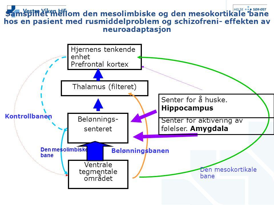 Samspillet mellom den mesolimbiske og den mesokortikale bane hos en pasient med rusmiddelproblem og schizofreni- effekten av neuroadaptasjon Hjernens