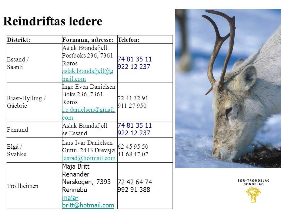 Distrikt:Formann, adresse:Telefon: Essand / Saanti Aslak Brandsfjell Postboks 236, 7361 Røros aslak.brandsfjell@g mail.com aslak.brandsfjell@g mail.co