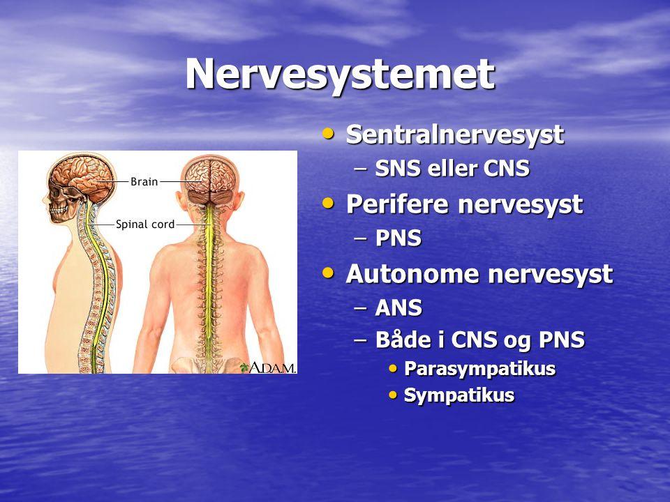 Nervesystemet Nervesystemet • Sentralnervesyst –SNS eller CNS • Perifere nervesyst –PNS • Autonome nervesyst –ANS –Både i CNS og PNS • Parasympatikus