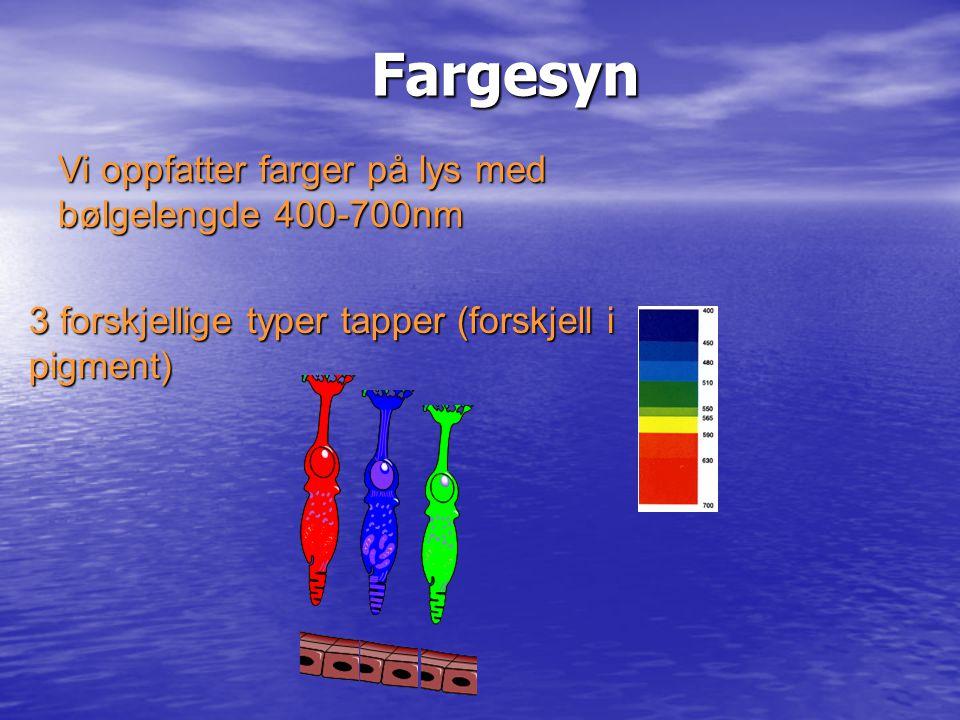 Fargesyn Fargesyn 3 forskjellige typer tapper (forskjell i pigment) Vi oppfatter farger på lys med bølgelengde 400-700nm