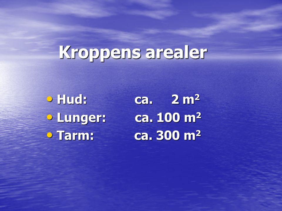 Kroppens arealer Kroppens arealer • Hud: ca. 2 m 2 • Lunger: ca. 100 m 2 • Tarm: ca. 300 m 2