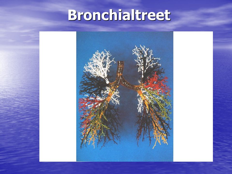 Bronchialtreet Bronchialtreet