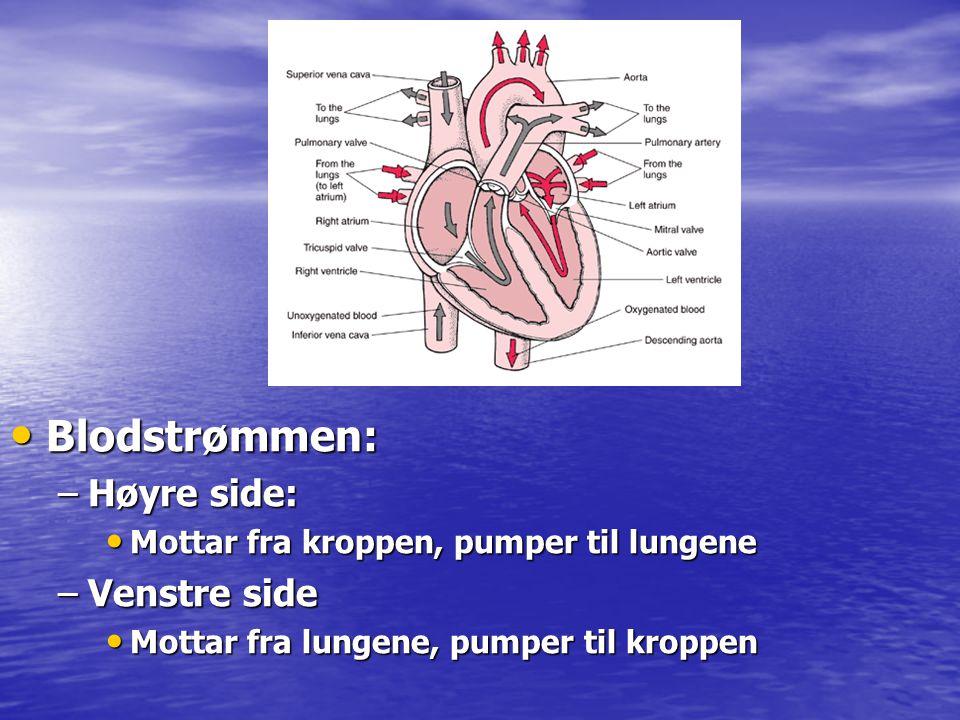 • Blodstrømmen: –Høyre side: • Mottar fra kroppen, pumper til lungene –Venstre side • Mottar fra lungene, pumper til kroppen