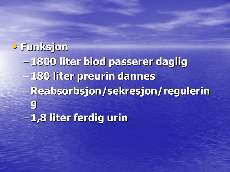 • Funksjon –1800 liter blod passerer daglig –180 liter preurin dannes –Reabsorbsjon/sekresjon/regulerin g –1,8 liter ferdig urin