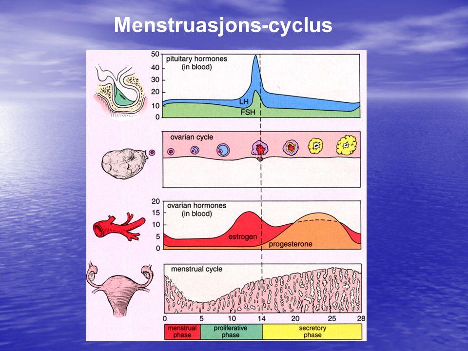 Menstruasjons-cyclus