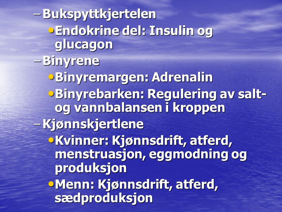 –Bukspyttkjertelen • Endokrine del: Insulin og glucagon –Binyrene • Binyremargen: Adrenalin • Binyrebarken: Regulering av salt- og vannbalansen i krop