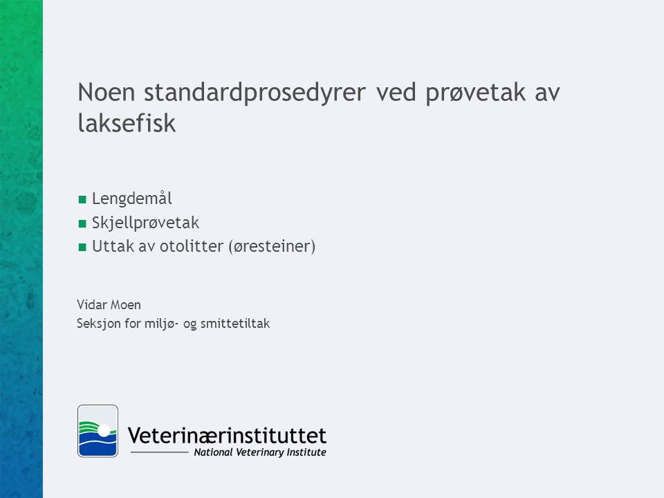Noen standardprosedyrer ved prøvetak av laksefisk  Lengdemål  Skjellprøvetak  Uttak av otolitter (øresteiner) Vidar Moen Seksjon for miljø- og smittetiltak