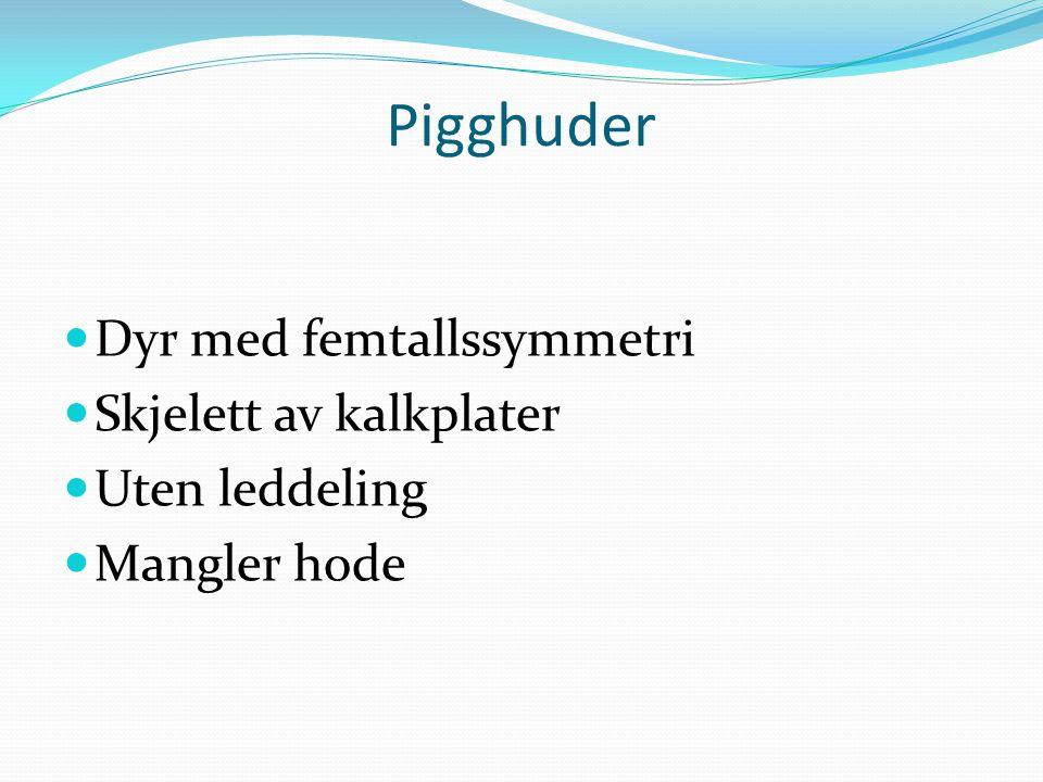 Pigghuder  Dyr med femtallssymmetri  Skjelett av kalkplater  Uten leddeling  Mangler hode