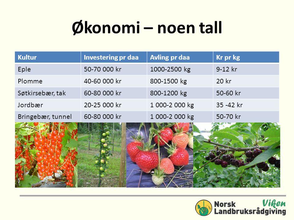 Økonomi – noen tall KulturInvestering pr daaAvling pr daaKr pr kg Eple50-70 000 kr1000-2500 kg9-12 kr Plomme40-60 000 kr800-1500 kg20 kr Søtkirsebær,