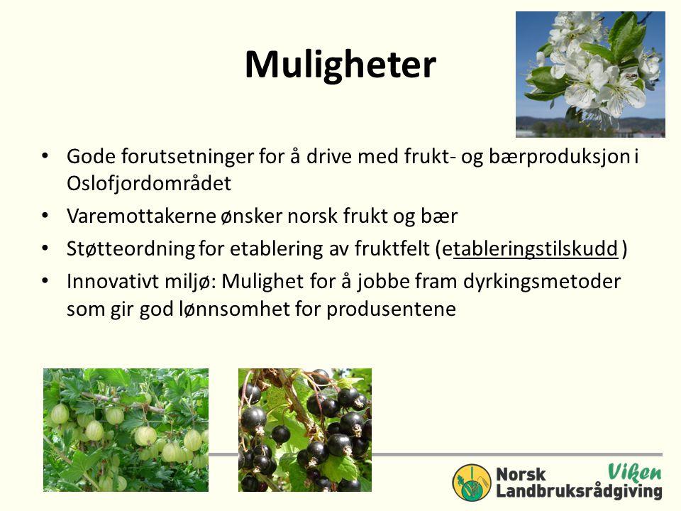 Muligheter • Gode forutsetninger for å drive med frukt- og bærproduksjon i Oslofjordområdet • Varemottakerne ønsker norsk frukt og bær • Støtteordning