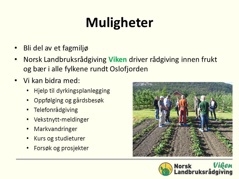 Muligheter • Bli del av et fagmiljø • Norsk Landbruksrådgiving Viken driver rådgiving innen frukt og bær i alle fylkene rundt Oslofjorden • Vi kan bid