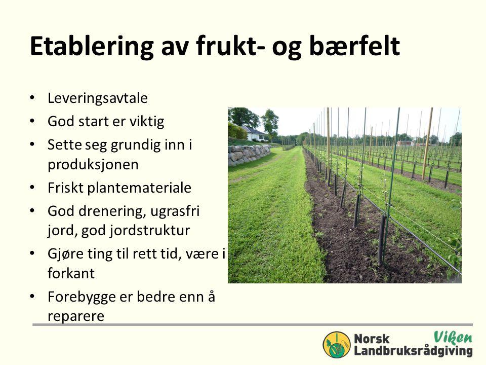 Etablering av frukt- og bærfelt • Leveringsavtale • God start er viktig • Sette seg grundig inn i produksjonen • Friskt plantemateriale • God drenering, ugrasfri jord, god jordstruktur • Gjøre ting til rett tid, være i forkant • Forebygge er bedre enn å reparere