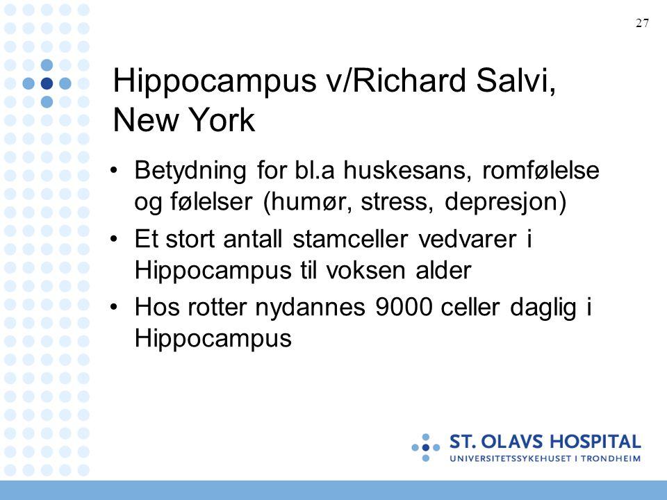 27 Hippocampus v/Richard Salvi, New York •Betydning for bl.a huskesans, romfølelse og følelser (humør, stress, depresjon) •Et stort antall stamceller