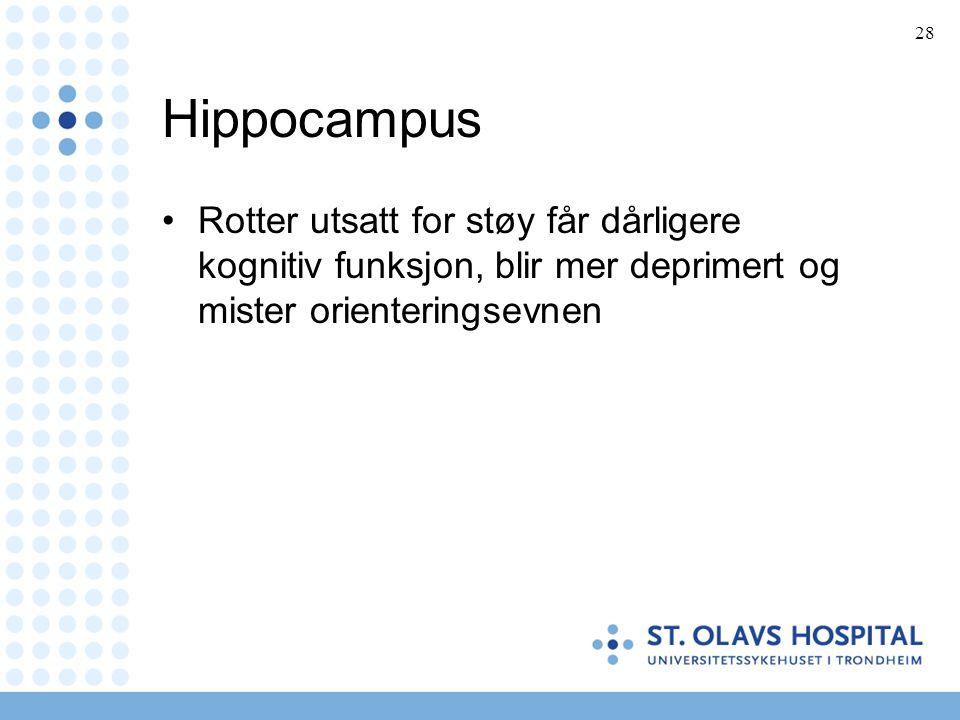 28 Hippocampus •Rotter utsatt for støy får dårligere kognitiv funksjon, blir mer deprimert og mister orienteringsevnen