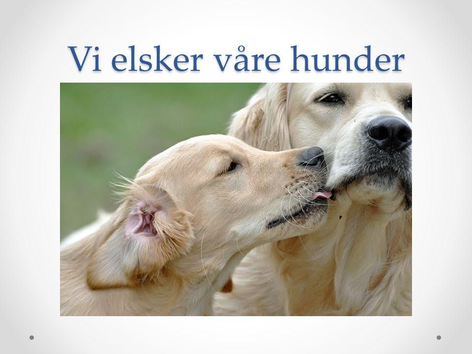 Vi elsker våre hunder