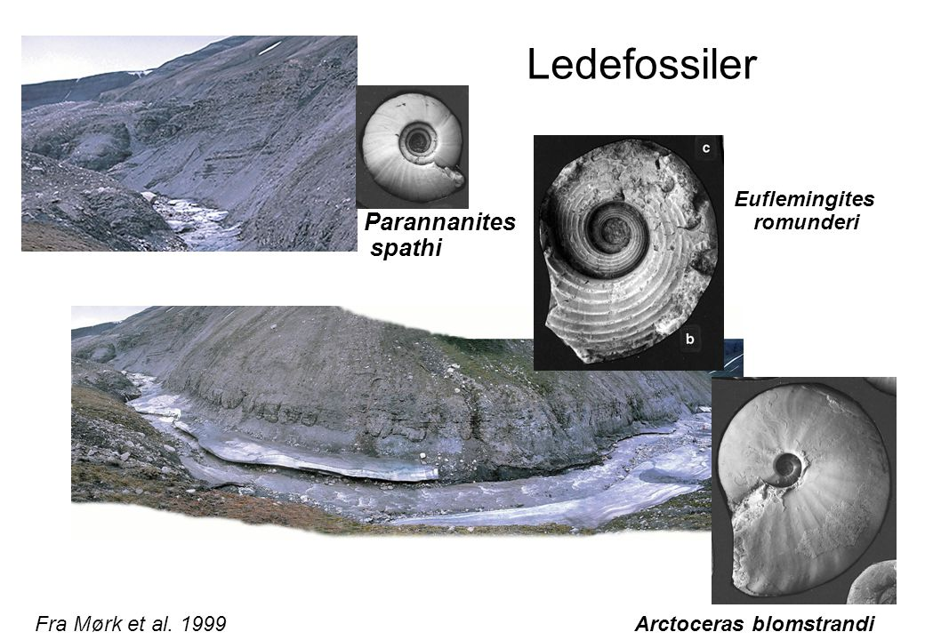 Ledefossiler Arctoceras blomstrandi Euflemingites romunderi Parannanites spathi Fra Mørk et al.