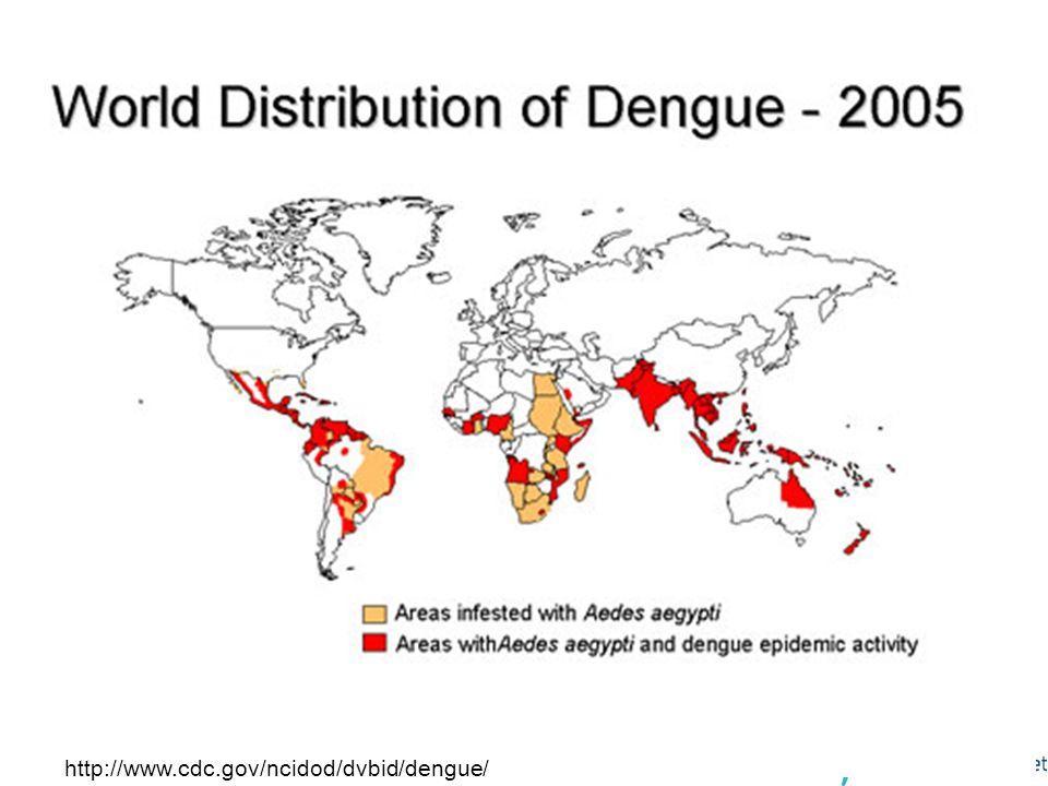 9 Dengue og aedes aegypti 2005 - verden http://www.cdc.gov/ncidod/dvbid/dengue/