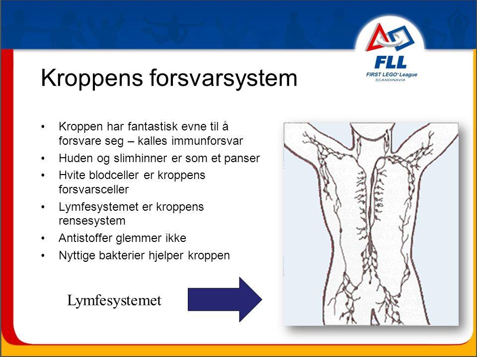 Kroppens forsvarsystem •Kroppen har fantastisk evne til å forsvare seg – kalles immunforsvar •Huden og slimhinner er som et panser •Hvite blodceller er kroppens forsvarsceller •Lymfesystemet er kroppens rensesystem •Antistoffer glemmer ikke •Nyttige bakterier hjelper kroppen Lymfesystemet