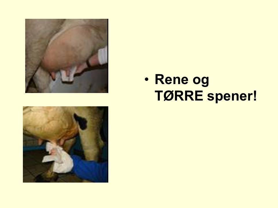 •Rene og TØRRE spener!
